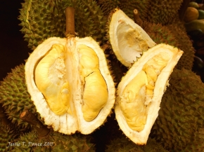 A newly-opened ripe durian
