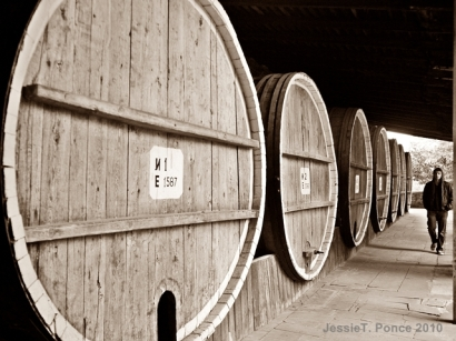 A line of huge oak barrels in Tsinandali