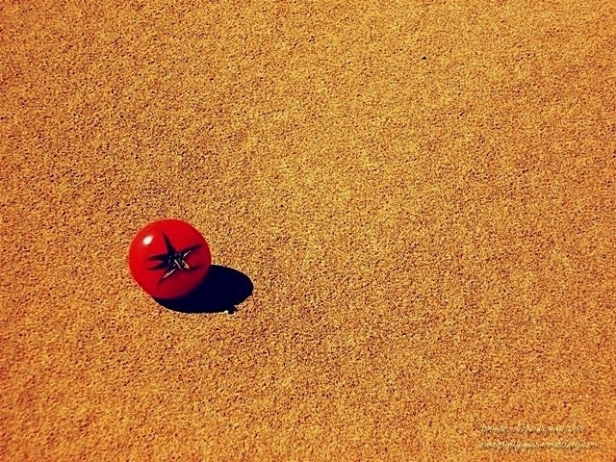 Tomato on the sand dune