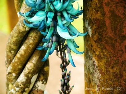 Vine, flower and moss create a dramatic interplay of colors in this photo