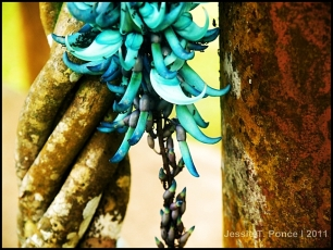 Sky Vine, Eden Nature Park, Davao City, Philippines, 2011