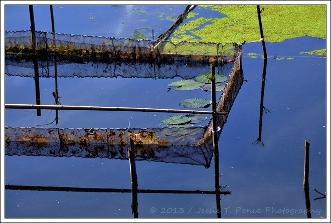 Fish cages on a still lake