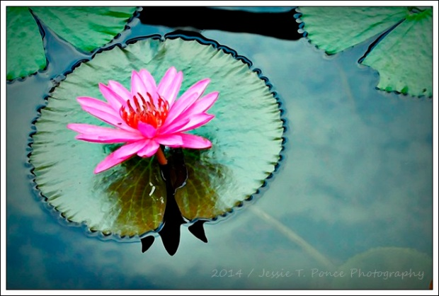 """Lotus Morning 4"" / 2014"