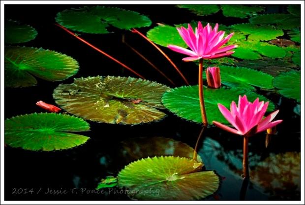 """""""Lotus Morning 5"""" / 2014"""