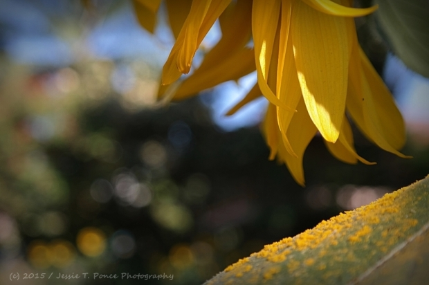"""Sundrops"" / Jessie T. Ponce Photography / March 2015"