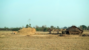 Myanmar agriculture