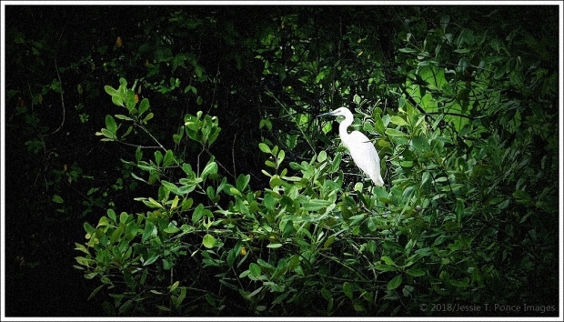 egret or heron